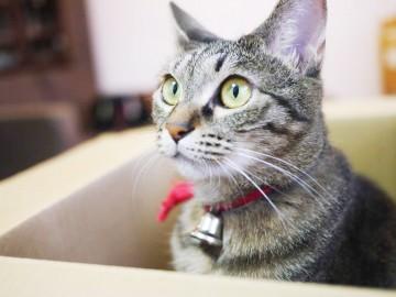 猫1fix